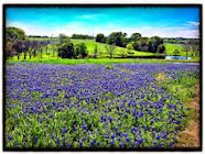 Springtime In South Texas