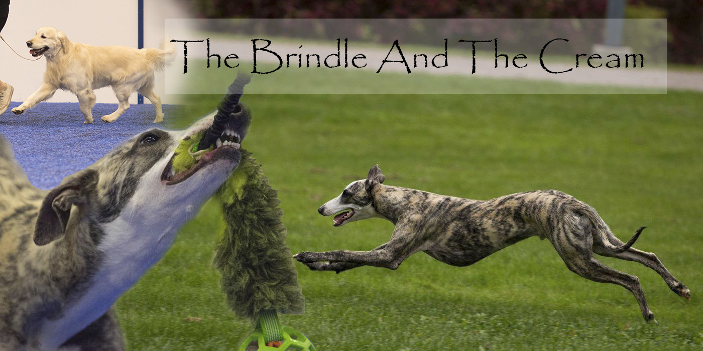 the brindle and the cream .