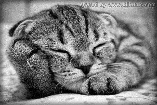 http://4.bp.blogspot.com/-IUwU6zCg1DQ/TXXbo34Ng7I/AAAAAAAAQaw/V7RrsdAG9Pg/s1600/these_funny_animals_632_640_24.jpg