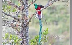 コスタリカで出会った野鳥(Bird of CostaRica)