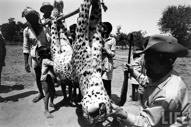 Tiger+Hunting+Photographs+of+India+-+1965+%252828%2529