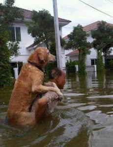 Amor, Compaixão, Solidariedade