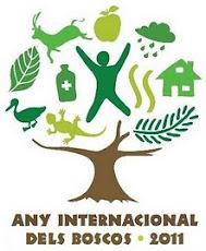 2011, ANY INTERNACIONAL DELS BOSCOS