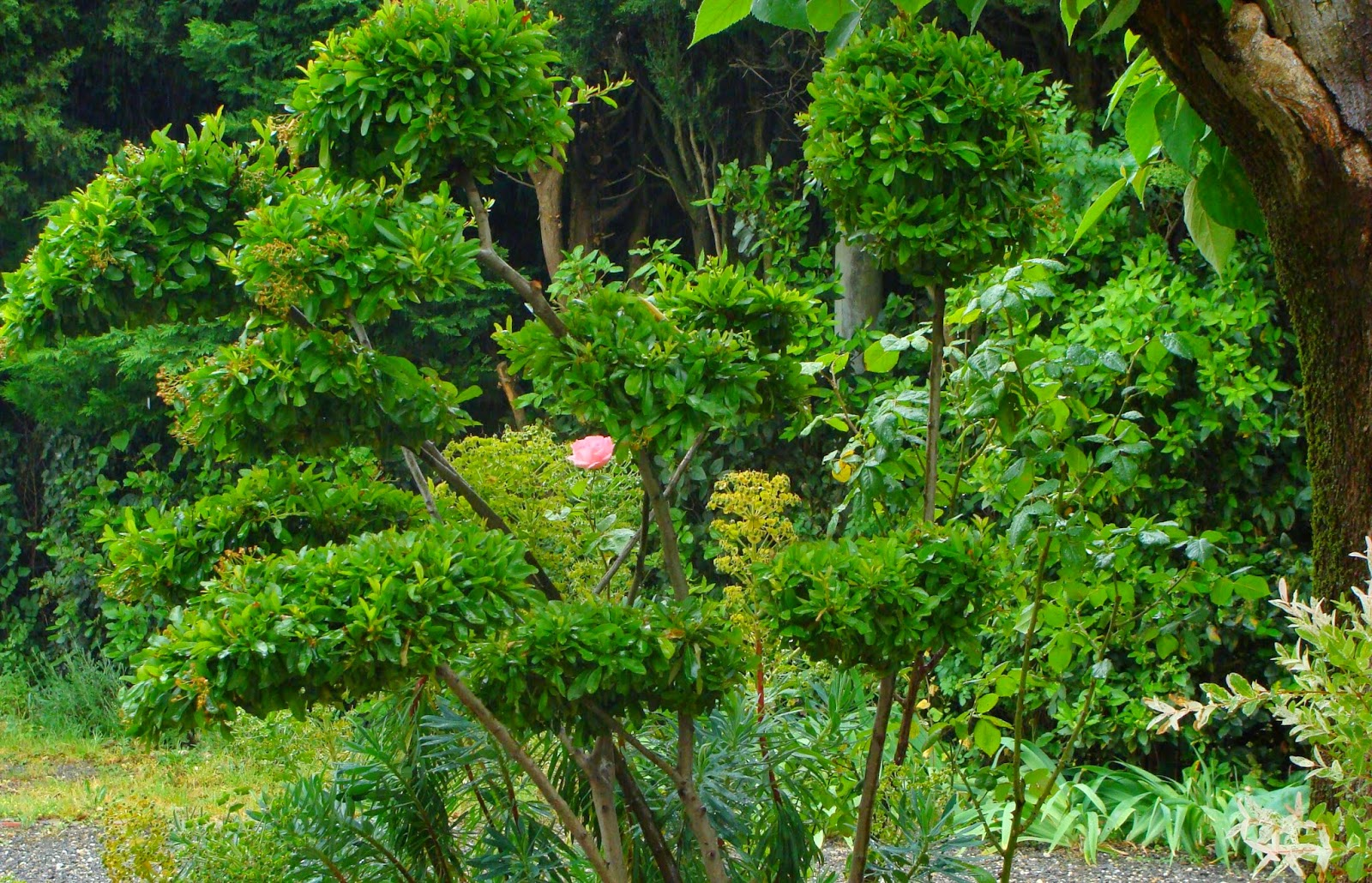 Jardine et ris moi vouloir toi de haut en bas for Jardin jardine