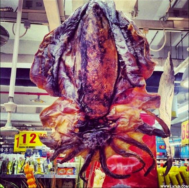 Bahan Makanan Super Aneh Yang Dijual di Pasar China | liataja.com