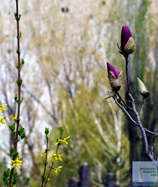 flori galbene si mov gradina botanica bucuresti