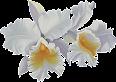 Belas Flores em Png