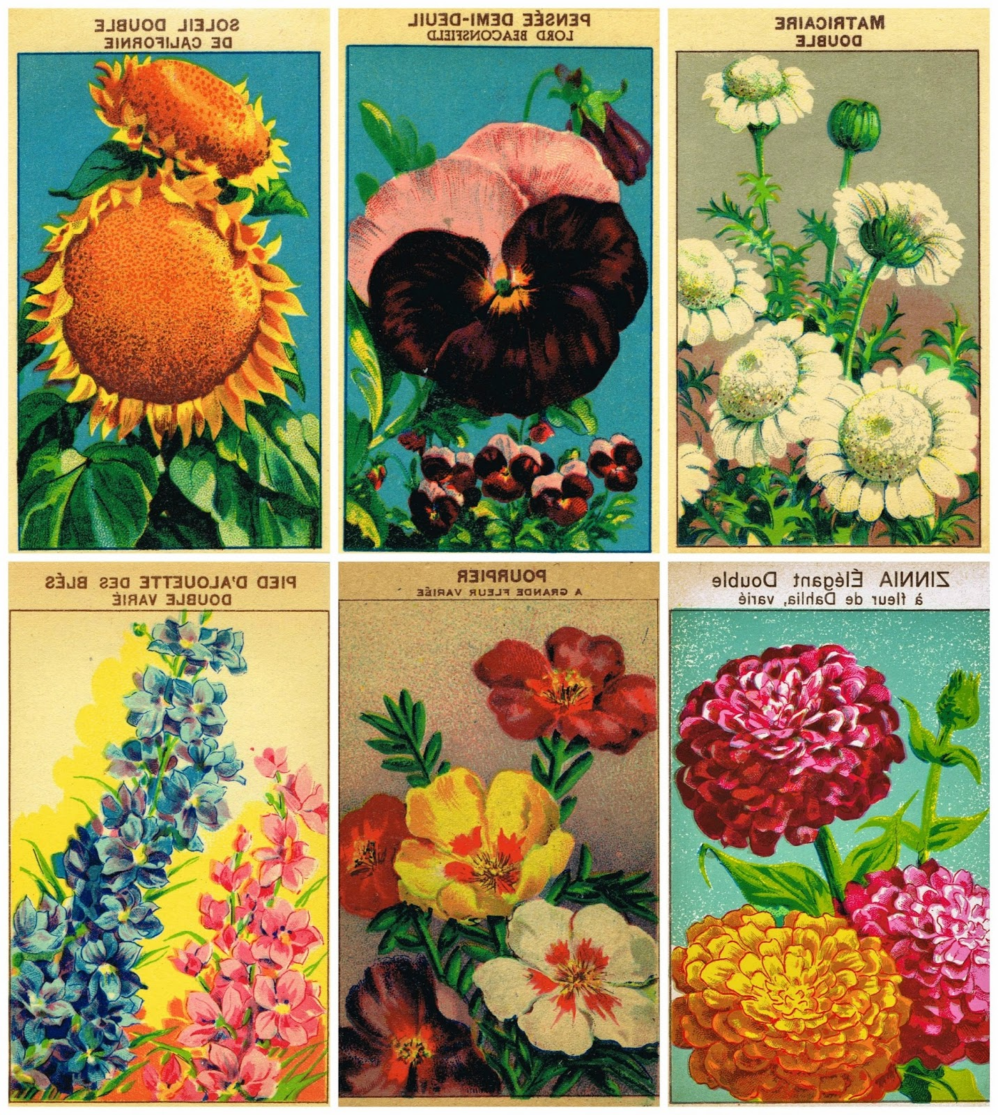 This is a graphic of Gorgeous Printable Seed Packets