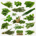 Top 10 Herbs To Fight Inflammation