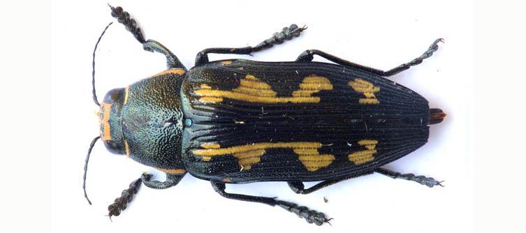 Boletín Sociedad Andaluza de Entomología Vol. 13