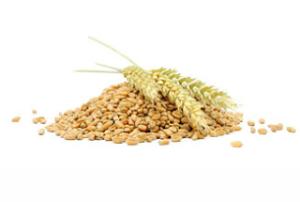 manfaat gandum untuk kesehatan kita