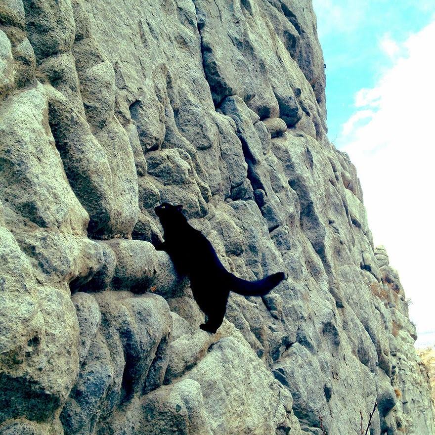"""Generally she does best on slabby routes where she can scramble from ledge to ledge. She's an incredible athlete, she does some big jumps and gaps"" - My Adopted Cat Is The Best Climbing Partner Ever"