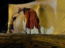 O lobo-guará, figura mítica da peça, é uma das espécies ameadas do Cerrado