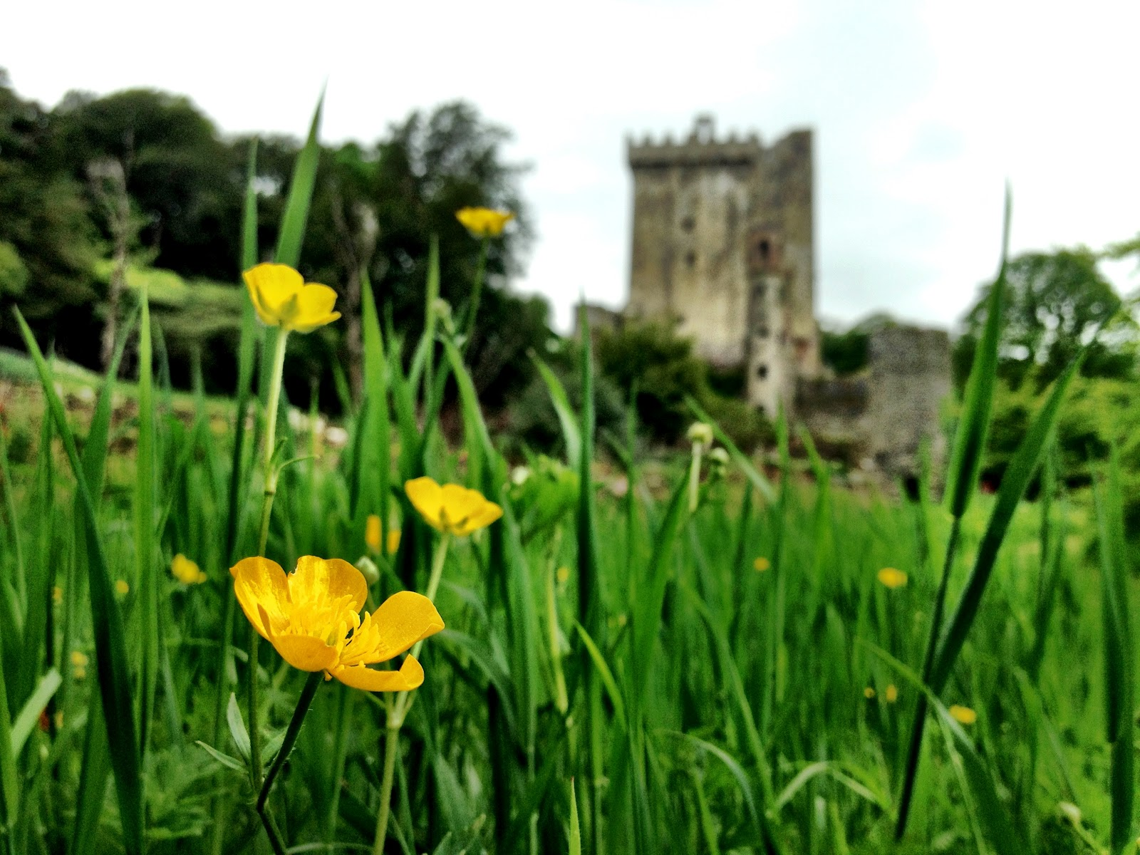 Blarney Castle, from the gardens