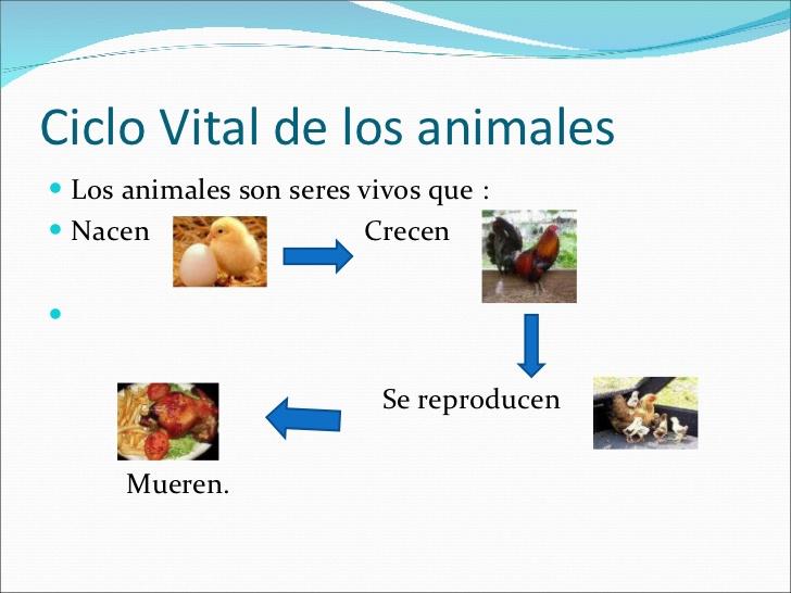 Los animales conocemos a los animales - Como se aparean los elefantes ...