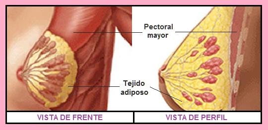 Deseas bajar quemador de grasa para bajar de peso rapido efecto las dietas