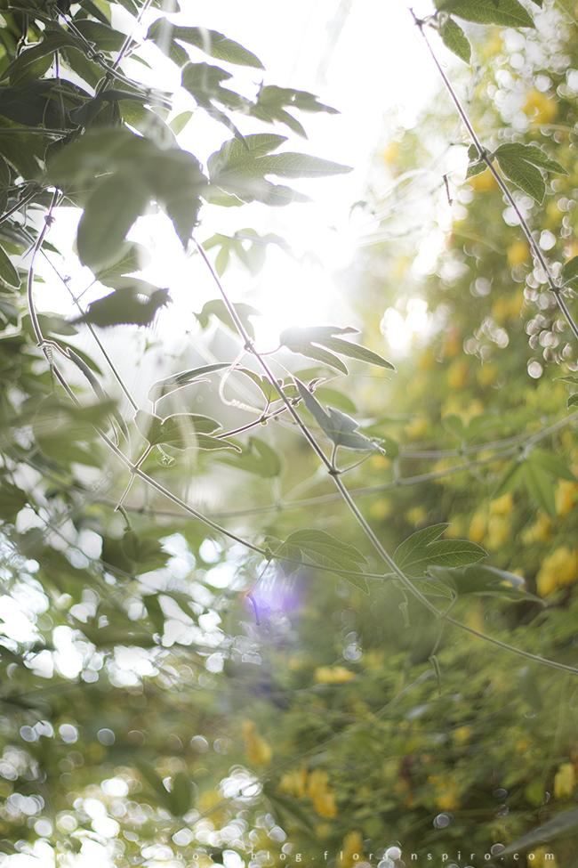ray of light, green leaves, botanical garden
