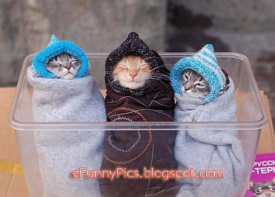 Kittens are Warming