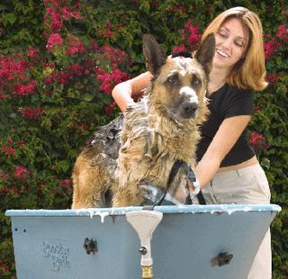 DERMOCANIS PIOCURE champú canino formulado para su uso frente a la pioderma superficial o profunda del perro.