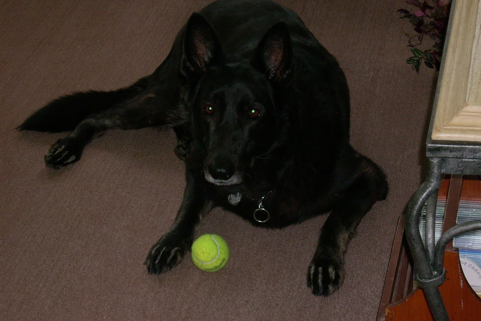 Ruby and Her Tennis Ball