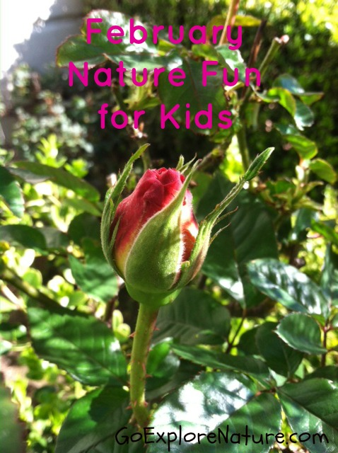 February Nature Fun for Kids