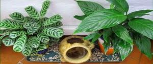 Plantas y flores plantas ornamentales for Algunas plantas ornamentales
