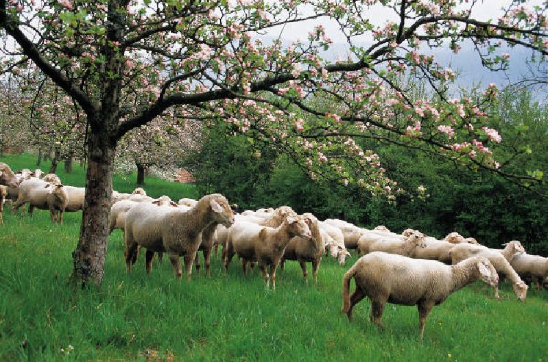 Σκάνδαλο με τους βοσκοτόπους. Λαθροχειρία καταγγέλλουν οι Κτηνοτρόφοι. Διαβάστε