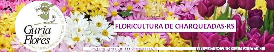 Guria das Flores floricultura Charqueadas RS