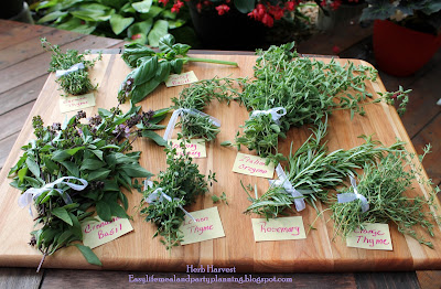 Herb Harvest by Easy Life Meal & Party Planning - Thyme, Basil, Oregeno, Rosemary, Cilantro