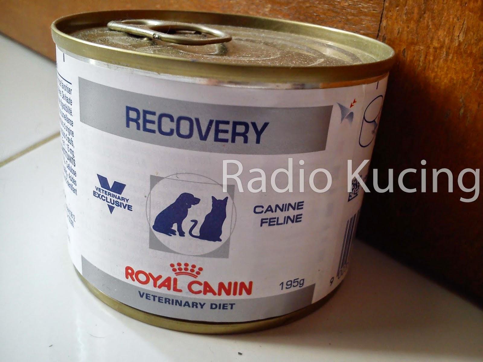 Review Makanan Kucing Anjing Royal Canin Recovery Wet Food