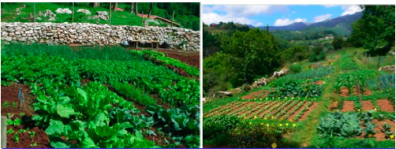 Huerta experimental urbana el huerto ecol gico introduccion for Rotacion cultivos agricultura ecologica