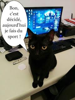 Chatte noire devant l'ordinateur.
