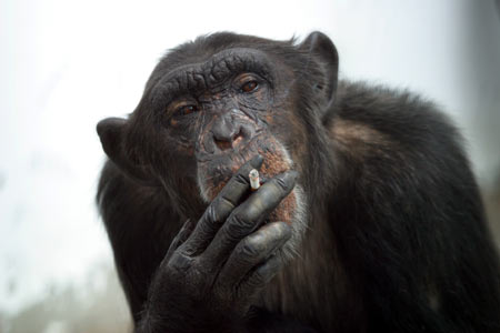 The Hangover' and a Cigarette-Smoking Monkey. Maybe This Monkey