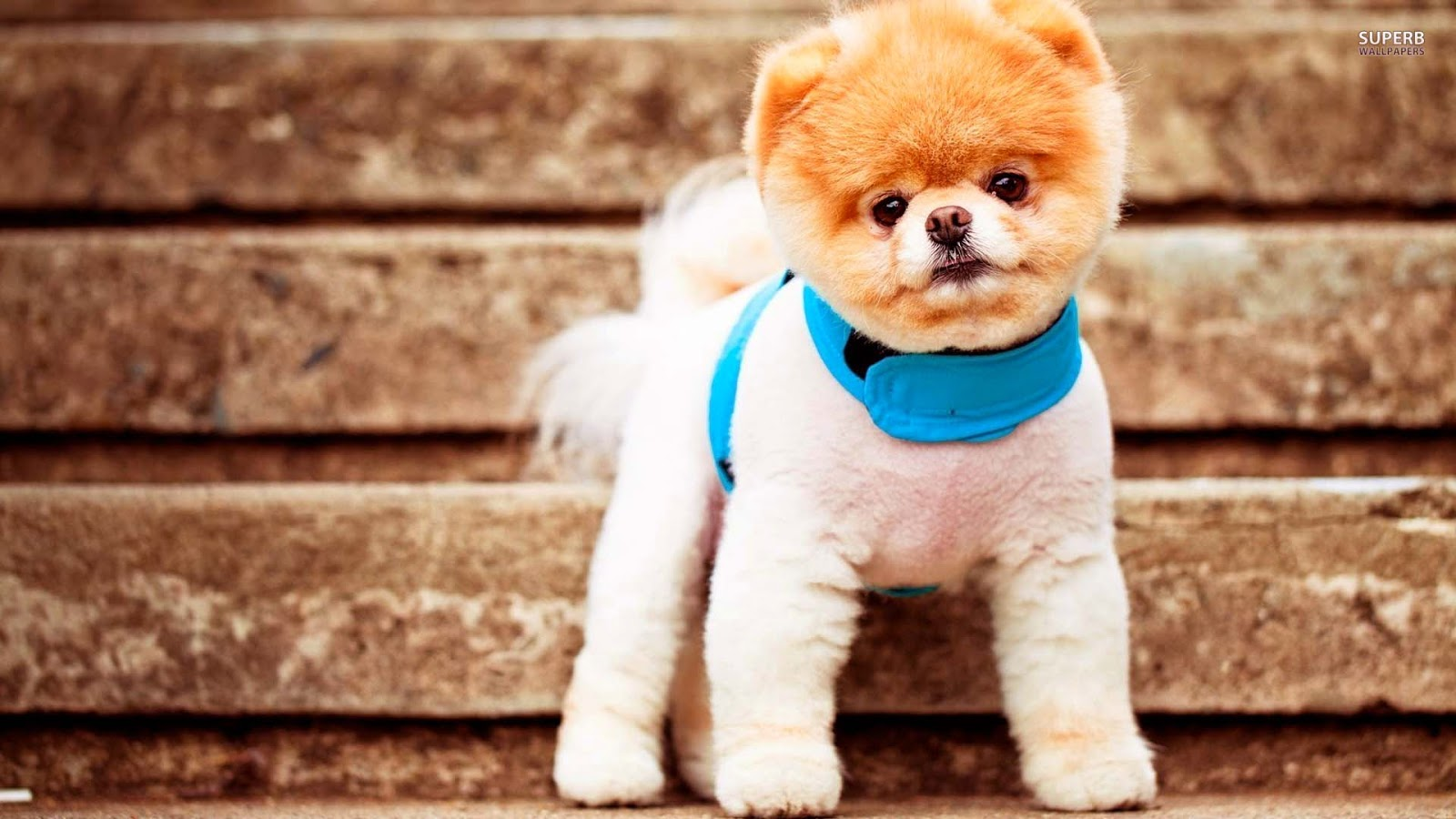 Cute Puppies Wallpapers Free Download free download