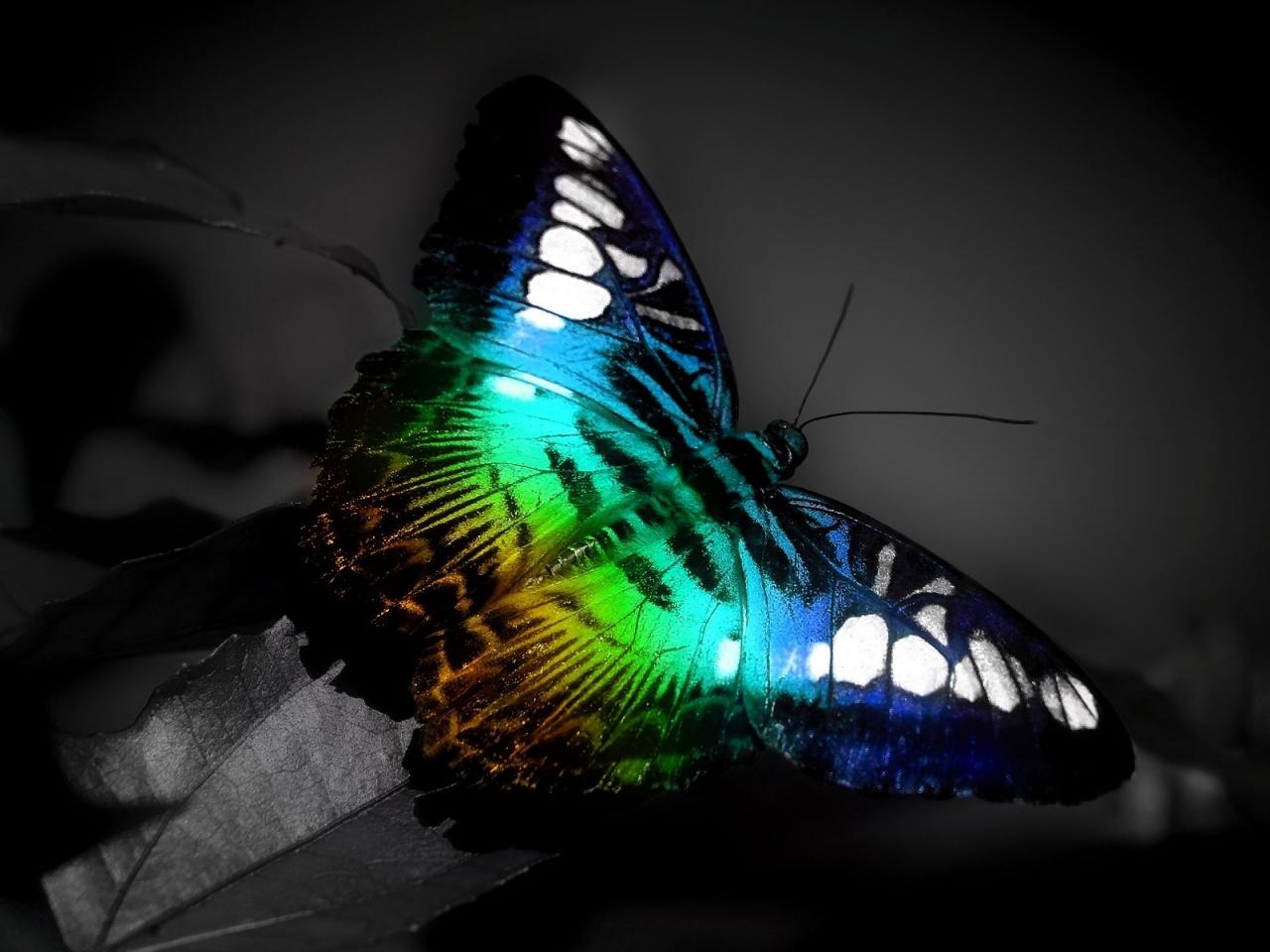 imagens coloridas para celular - Papel de Parede Design Projeções Coloridas Wallpaper