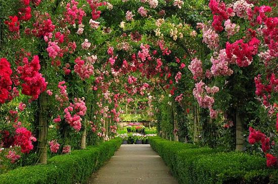 Inilah gambar-gambar keindahan taman bunga butchart gardens :