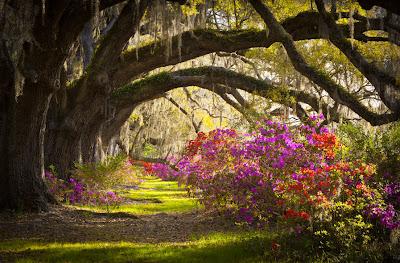 Jardines de Magnolias en Charleston, Carolina del Sur, USA.