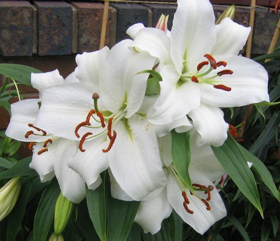 Llega la primavera a la Casa Blanca con un nuevo jardín