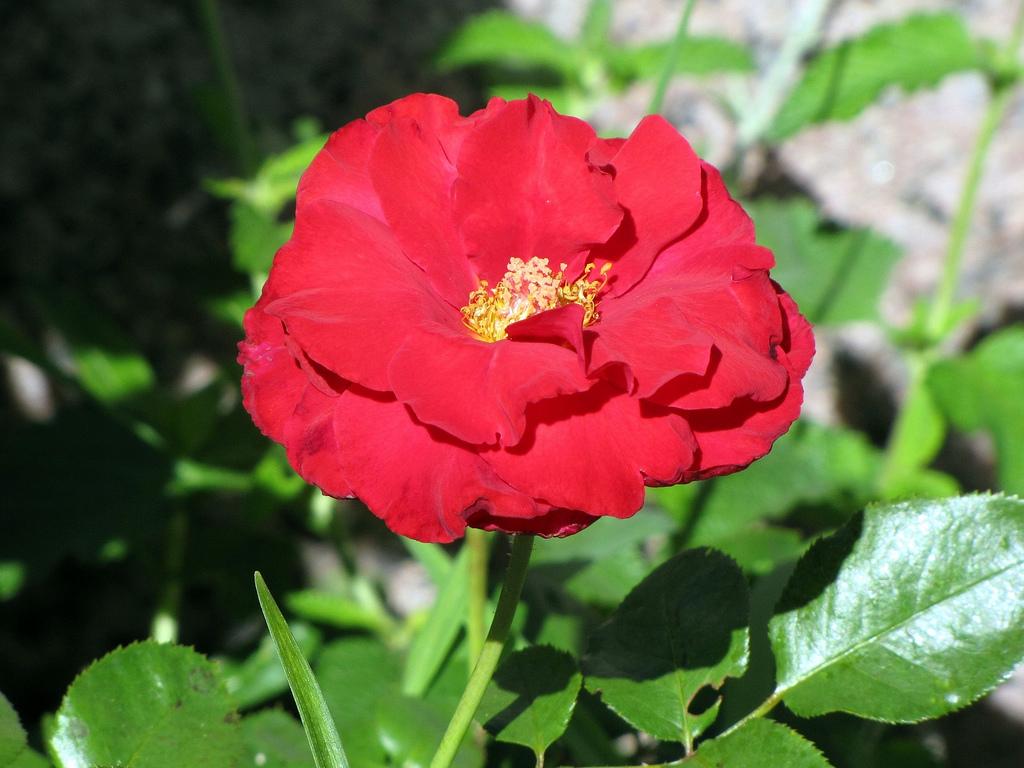 Poemas de una mujer un mar en calma 21 de septiembre d a for Cancion jardin de rosas