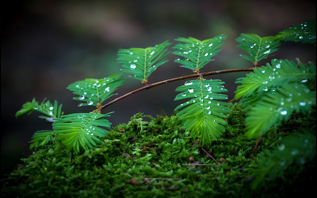 Hojas y Ramas Verdes Imágenes Naturaleza