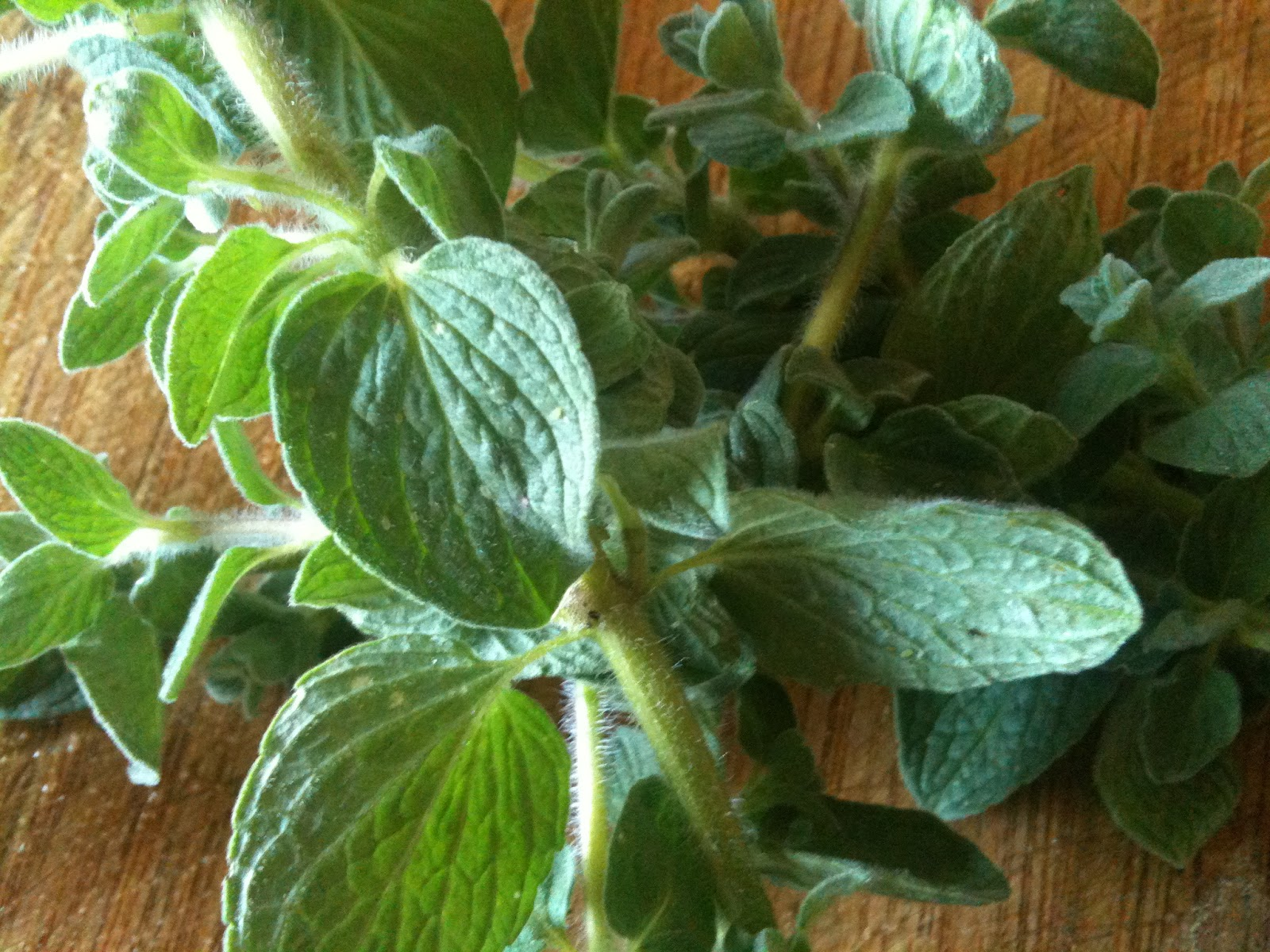 Soul Flower Farm The latest Kraut Cortido