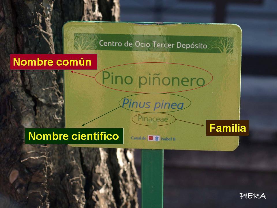 Las plantas los nombres de las plantas - Etiquetas para plantas ...