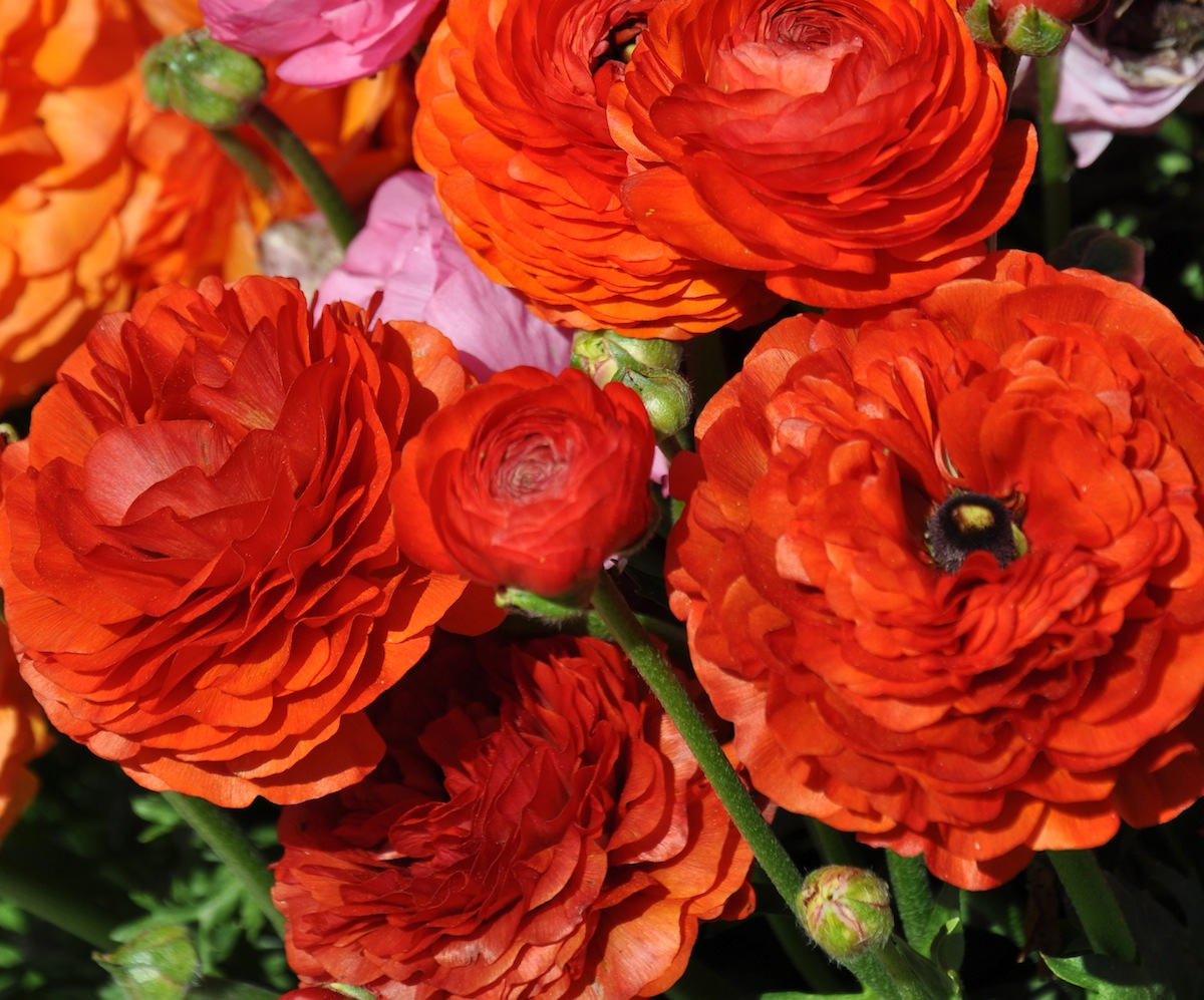 Orange Flowers Dominate 2013 President Obama Inaugural Luncheon ...