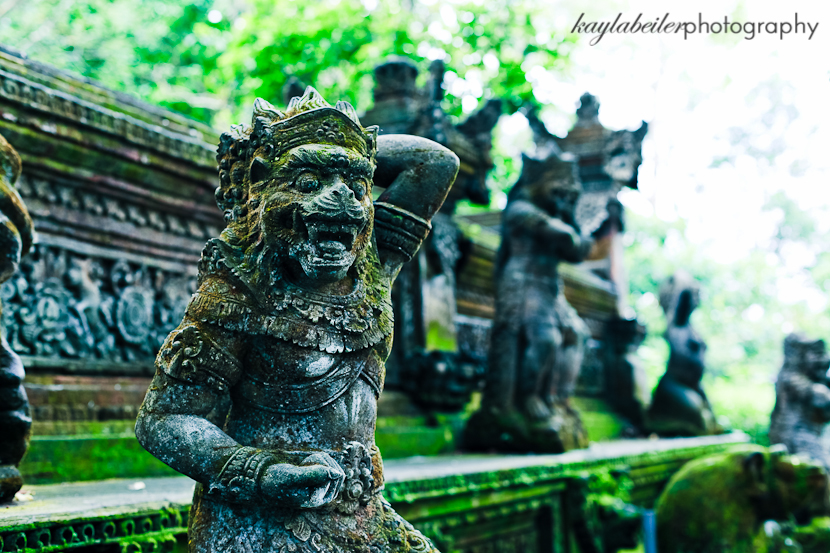 sacred monkey forest photo