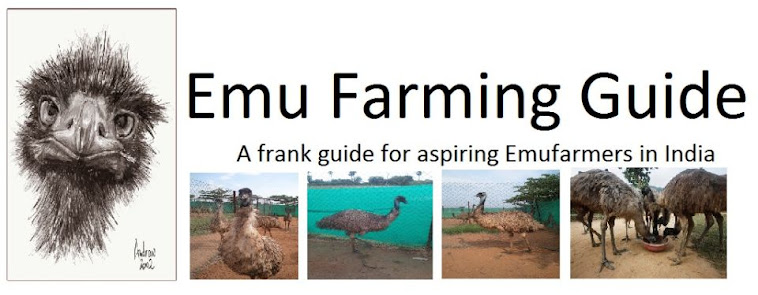 Emu Farming Guide