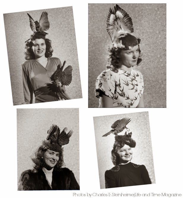 1948 vintage turkey feather hats time and life magazine