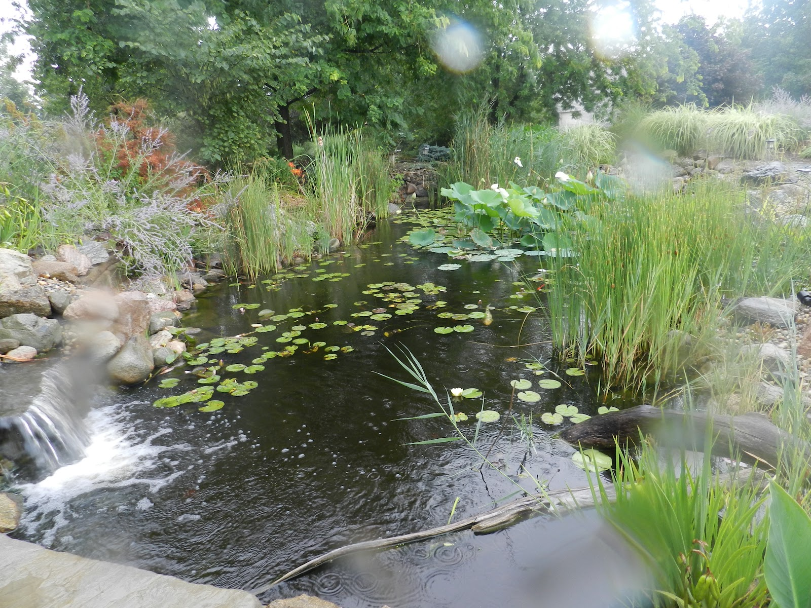 Ponds For Backyard With Waterfall