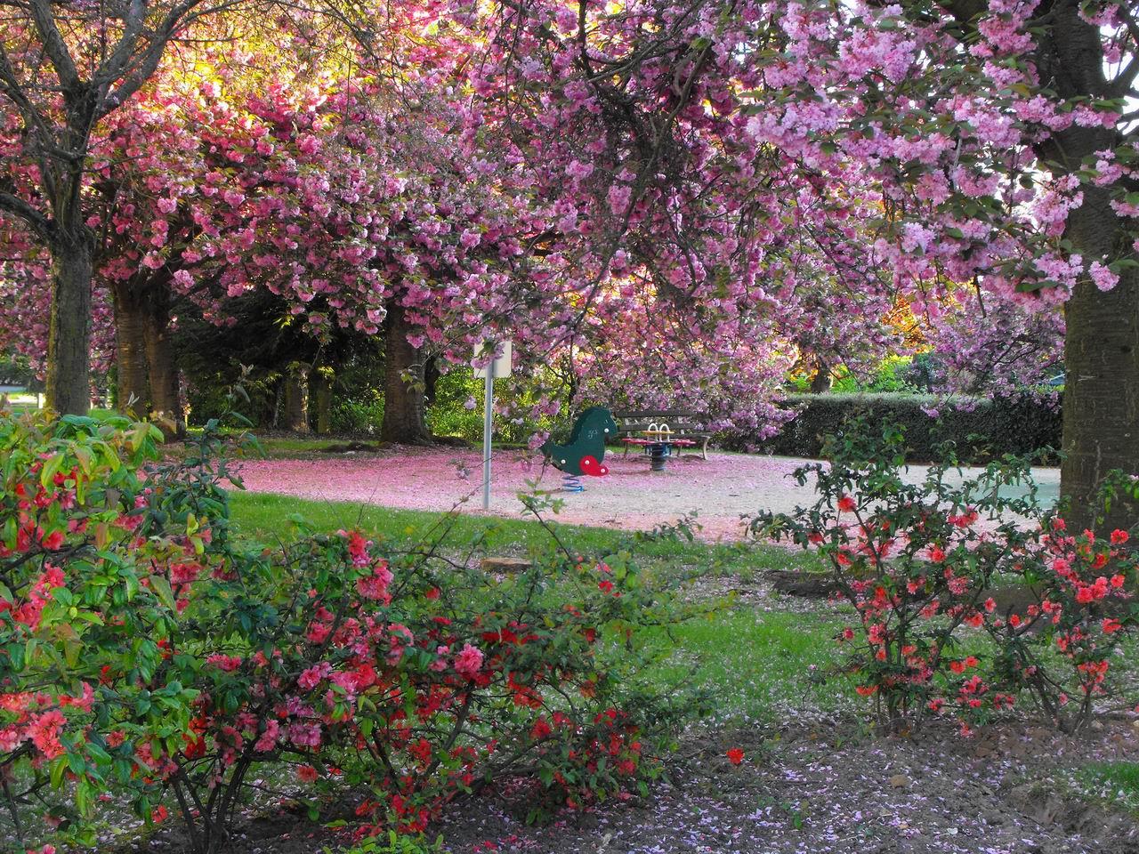 Evariste zephyrin photographer le jardin des cerisiers for Le jardin des fleurs