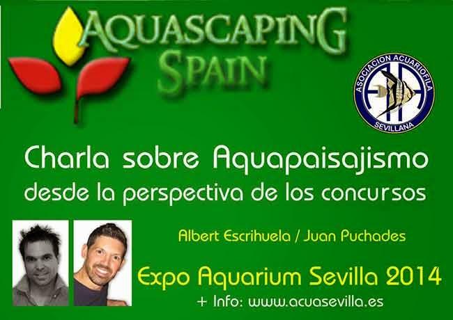 Aquascaping spain charla aquapaisajismo desde perspectiva - Aquascape espana ...