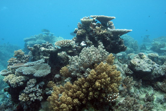 Importance Of Coral Reefs And Mangroves Importance Of Coral Reefs And Mangroves